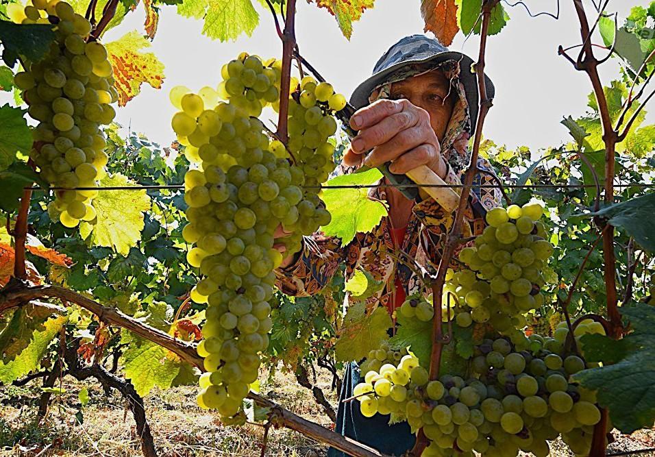 Значение притчи о винограднике и виноградарях