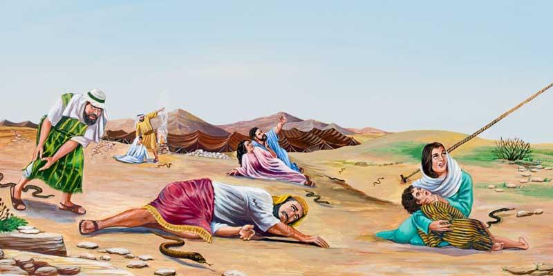 Змеи в пустыне